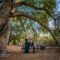 Dramatic engagement photos in Orange County. Bride-to-be poses for engagement pictures in her elegant hunter green gown next to her fiance at a wilderness park in Coto De Caza.